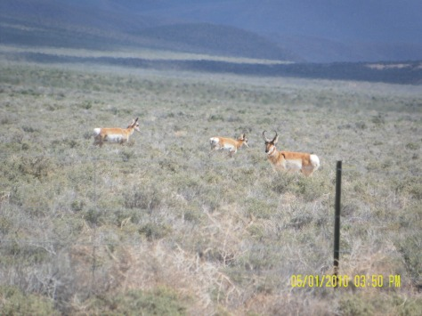 Antelope - Catlow Valley