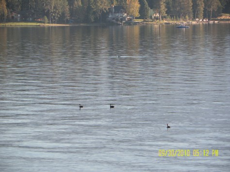 Greebes on Lake Pend Oreille