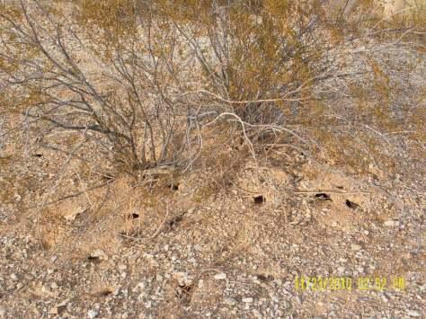 Scorpion or Tarantula holes?