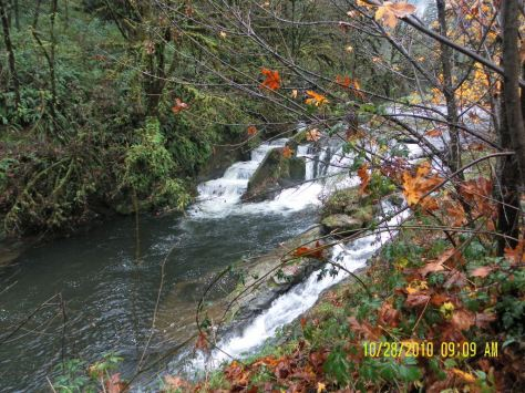 Fall Creek on the Alsea Hwy