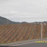 Vineyards, Windyards and Needles