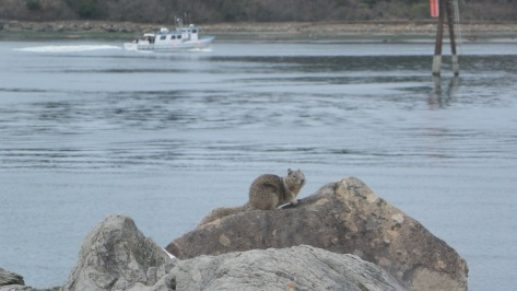 Squirrel at South Jetty