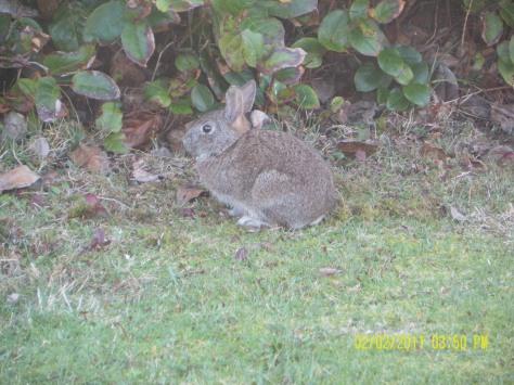 Tillicum Beach Campground Bunny