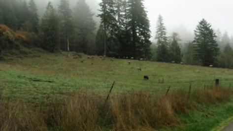 Elk Herd - Little Switzerland Rd