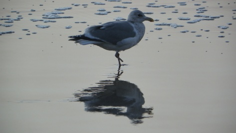 One-footed Seagull