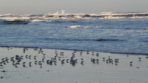 Waves and Plovers