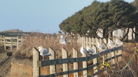Seagull Lineup