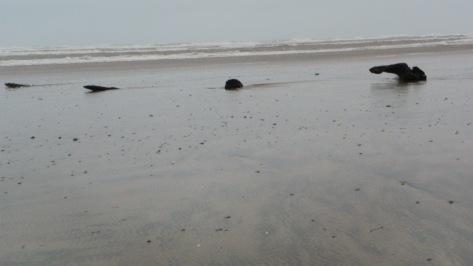 stumps on Tillicum Beach