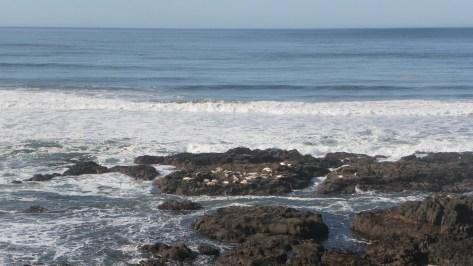 Strawberry Hill - Cape Perpetua Scenic Area