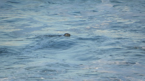 Commuter Seal