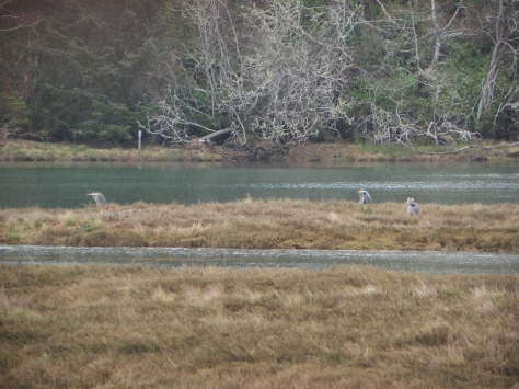 Blue Heron on Lint Slough