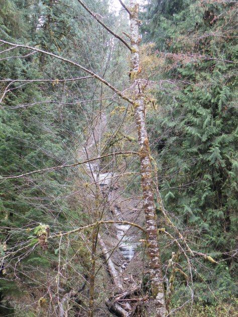 Mudslide scoured canyon