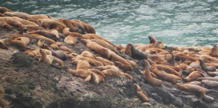 Sea Lions outside the caves