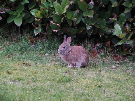 Tillicum Easter Bunny