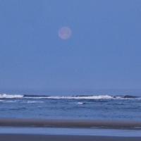 Tillicum Beach Razor Clamming