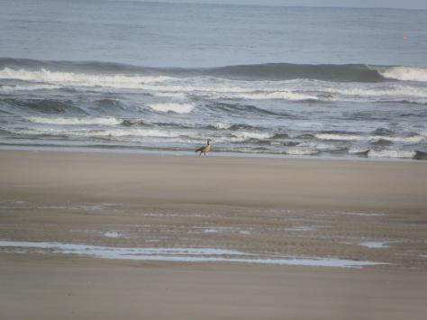 Goose on a beach?