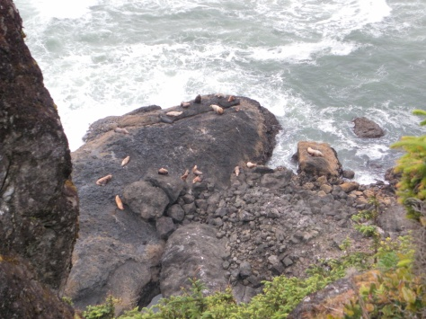 Sea Lions at Heceta Lighthouse Overlook