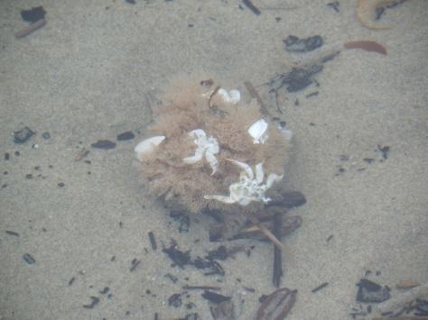 Sponge camo'd with crab parts