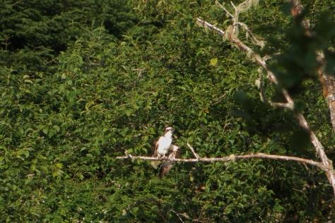 Osprey Stretching