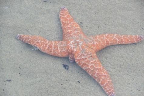 New Sea Star Arm