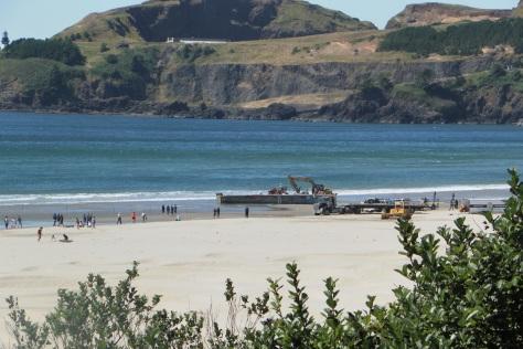 Agate Beach Tsunami Debris Removal