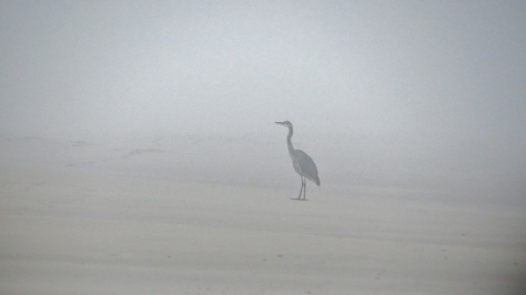 Heron in Tillicum Beach Fog
