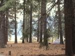 Ponderosa-ViewOfButtLake