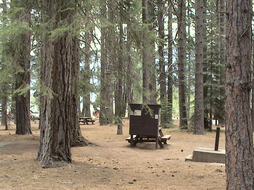 Ponderosa-campsite
