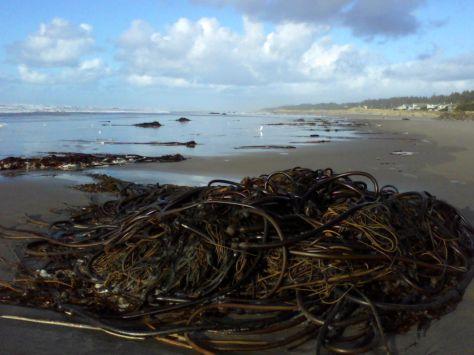 Bull Kelp Slaughter