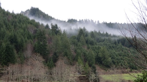 Touch of Fog Through the Trees