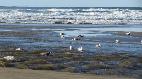 Seagull Turkish Bath