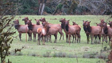 Elk Huddle