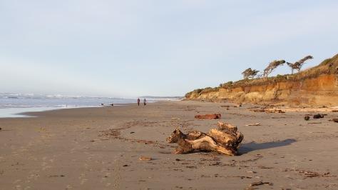 Tillicum Beach Driftwood