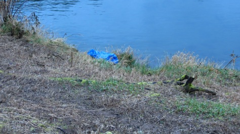 beaver theft