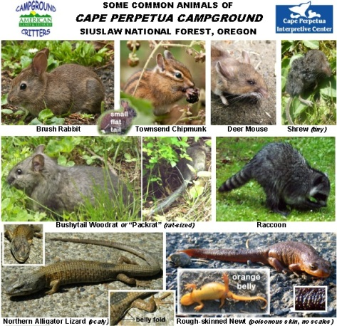 Cape Perpetua Campground Animals