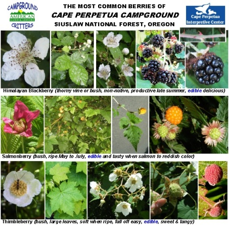 Cape Perpetua Campground Berries