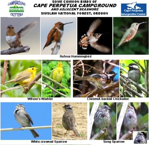 Cape Perpetua Campground Birds