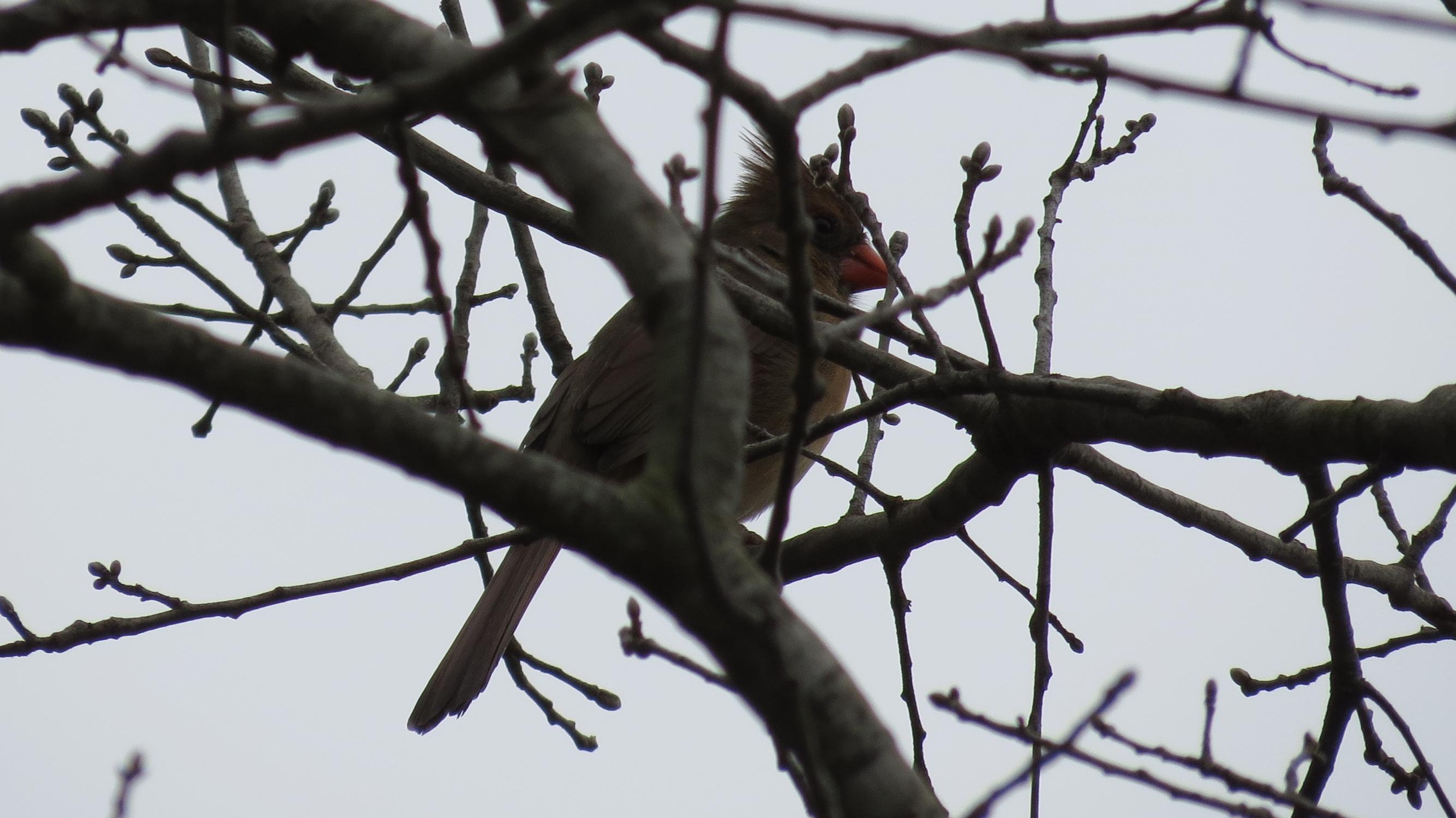 Backyard Birds in Texas   Pamperingcampers Blog