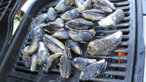 Mussels on the Barby