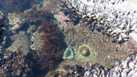 Tidepools at Bob Creek