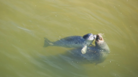 Seal Pup Kisses