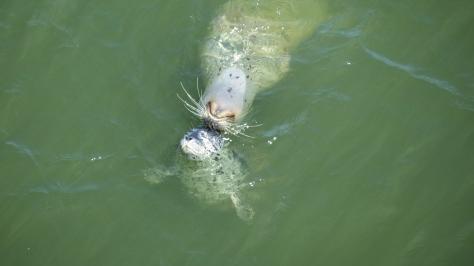 Seal Snuggles