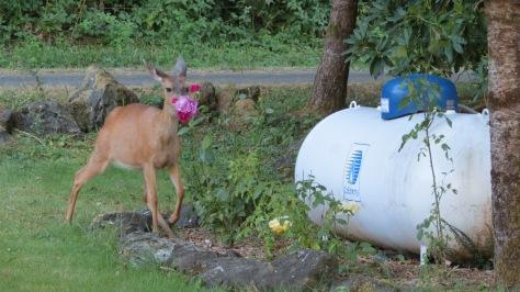 Deer in Roses