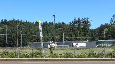 osprey at Waldport High