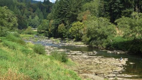 Alsea River - Low Tide