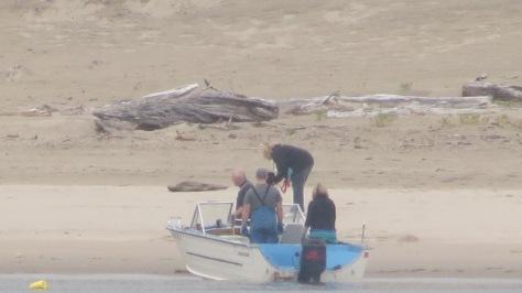 crabbing for dungeness in alsea bay
