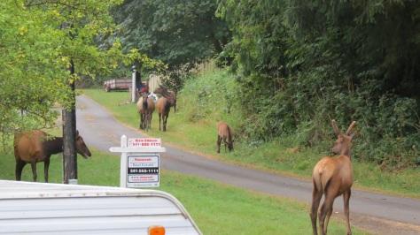 Elk Landscaping Crew