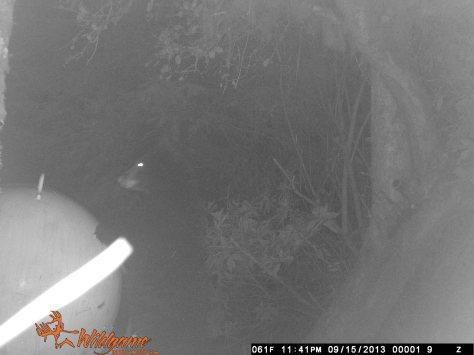 Bear Cub Peakin' Over Propane Tank