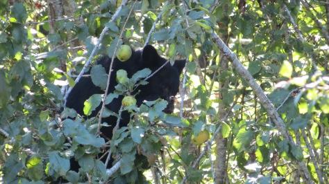 Bear Cub Snack Bar