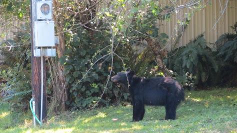 Comparison photo of mama bear